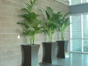Interior Plant Design, Sales Rental U0026 Maintenance