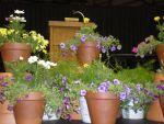 flowering_on_stage